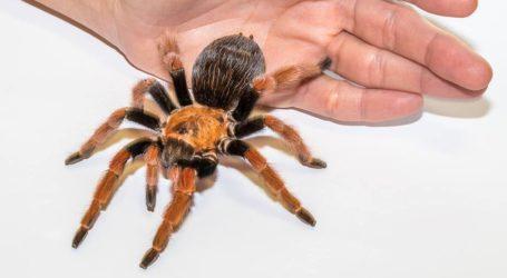 Fascynujący świat pająków i skorpionów w opoczyńskim MDK